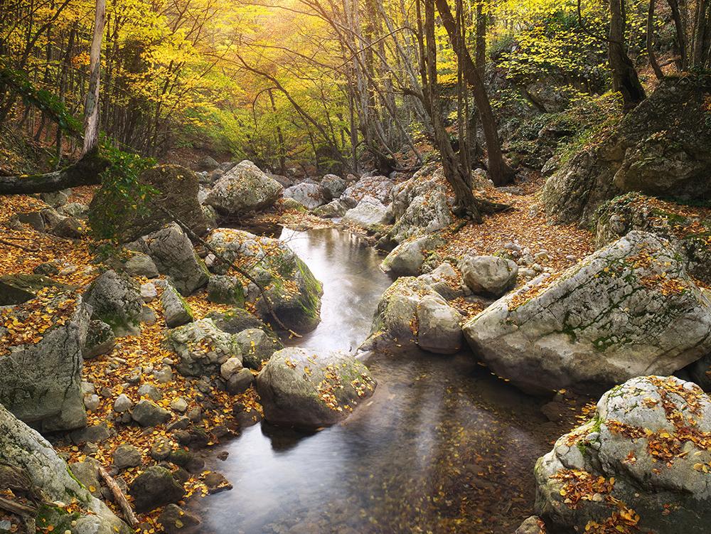 Fotografi på en stilla bäck i skogen. Höstligt landskap med gula blad på träd och mark.
